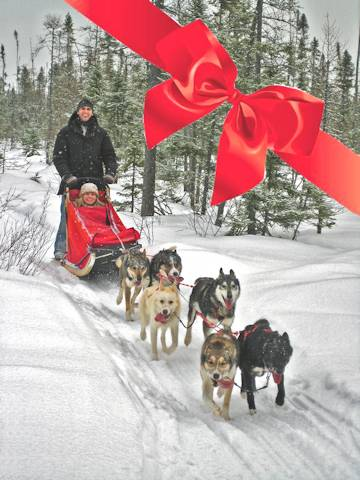 Chilly Dogs Sled Dog Trips Gift Certificates